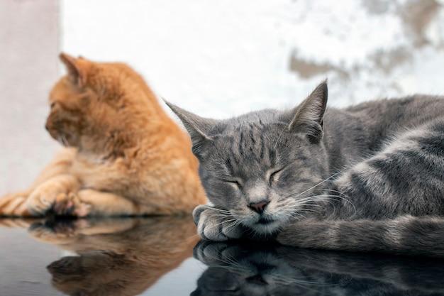 Binnenlandse katten bovenop de auto
