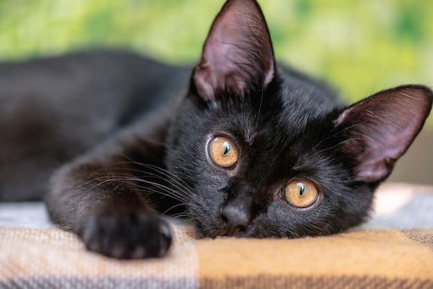 Binnenlandse zwarte kat op een bankje vooraan. gezicht schattige jonge kat thuis