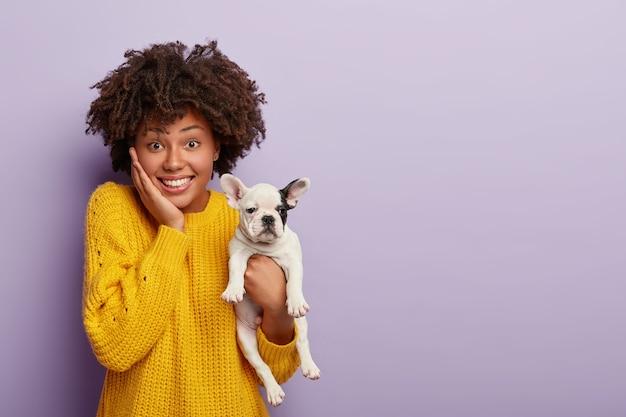 Binnenopname van blij jong vrouwtje heeft afro-kapsel, krijgt goed nieuws van dierenarts over de gezondheid van huisdieren, houdt franse bulldog-puppy vast met gladde vacht, zwart oor, poseert samen over violette muur. binnenlands ras