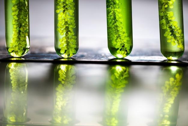 Biodieselproductie is het productieproces van de biobrandstof, biodiesel, in het laboratorium