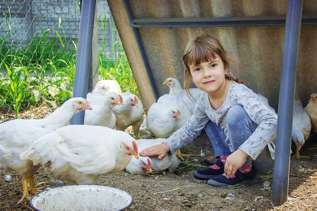 Biokippen op een huislandbouwbedrijf kinderen.