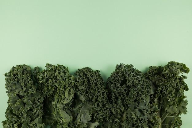 Biologische boerenkool (italiaanse boerenkool, toscaanse boerenkool, dinosauruskool, lacinato) op een delicate groene achtergrond