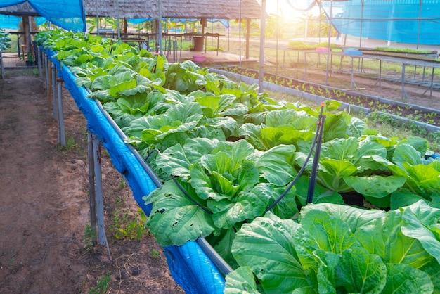 Biologische groenteboerderij