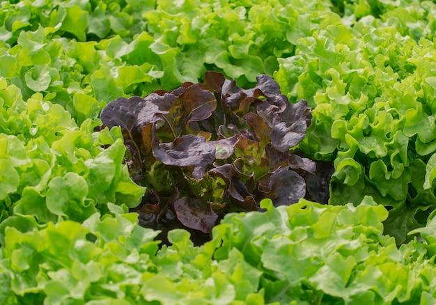 Biologische groenten in de boerderij