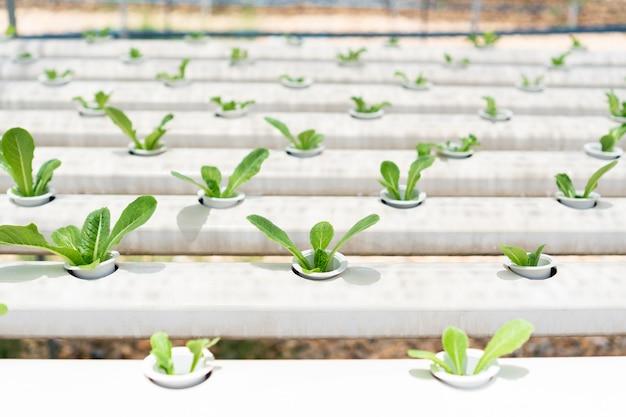 Biologische hydrocultuur groenteteelt boerderij