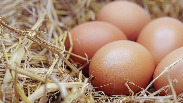 Biologische kippeneieren met fang