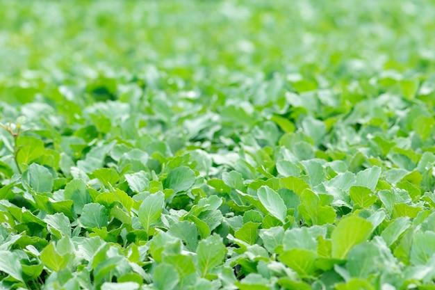 Biologische landbouw, zaailingen die groeien in kas.
