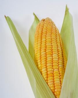 Biologische maïskolf geïsoleerd op een witte achtergrond.