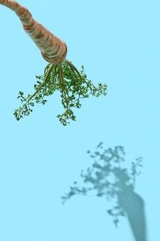 Biologische peterseliewortel met bladeren op een blauwe achtergrond met een patroon