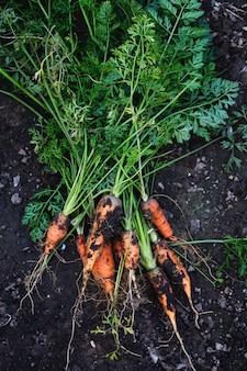 Biologische wortelen op de grond