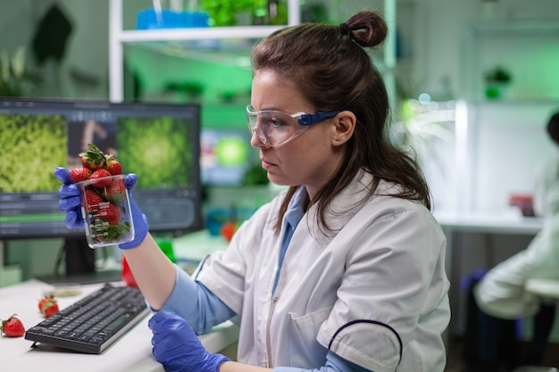 Bioloog-onderzoeker die biologische aardbeien bekijkt die fruit onderzoeken voor medische expertise in de microbiologie. chemici-wetenschappers die in een landbouwlaboratorium voor farmacologie werken en genetische mutaties op voedsel ontdekken