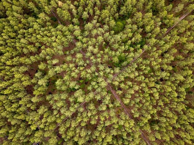 Bird eye's bovenaanzicht van vliegende drone boven landschap groen bosgebied met gekruiste onverharde wegen in een zomerdag.