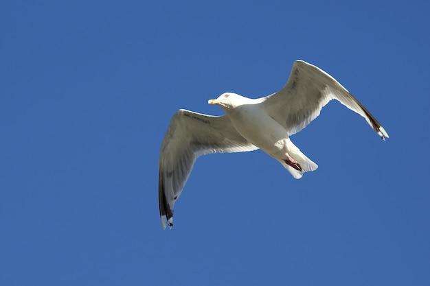 Bird seagull vliegt tegen de hemel