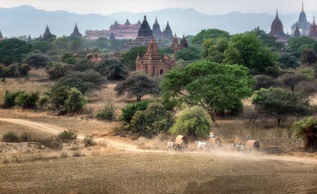 Birmaans landelijk vervoer met twee witte ossen die houten kar trekken