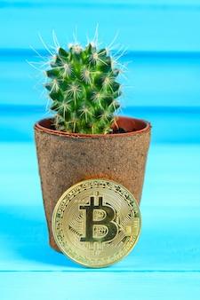 Bitcoin en cactus. priklijn bitcoin. angst voor verlies, hoge prijs