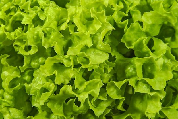 Blaadjes sla salade