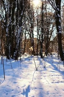 Blad aan een tak van de winterboom