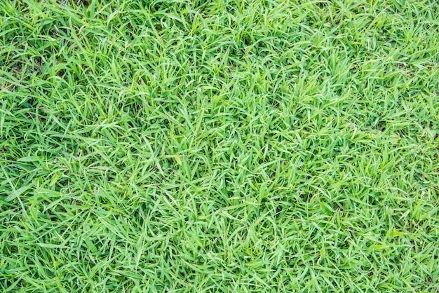 Blad groen blad macro decoratie.