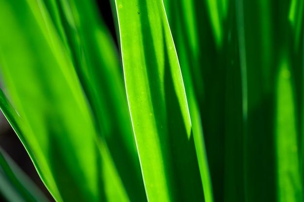 Blad groen patroon in schaduw