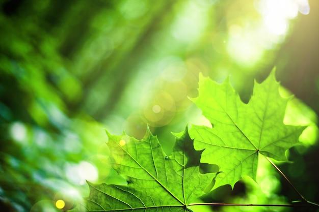Blad op een boom in het bos. natuur groen hout zonlicht oppervlakken. lente zomer