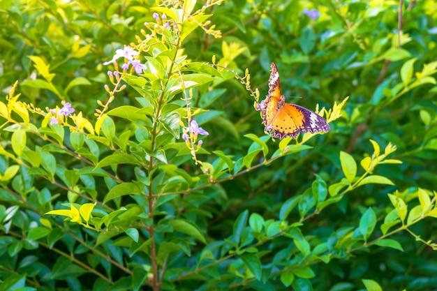Bladachtergrond met vlinders en ochtendzonlicht