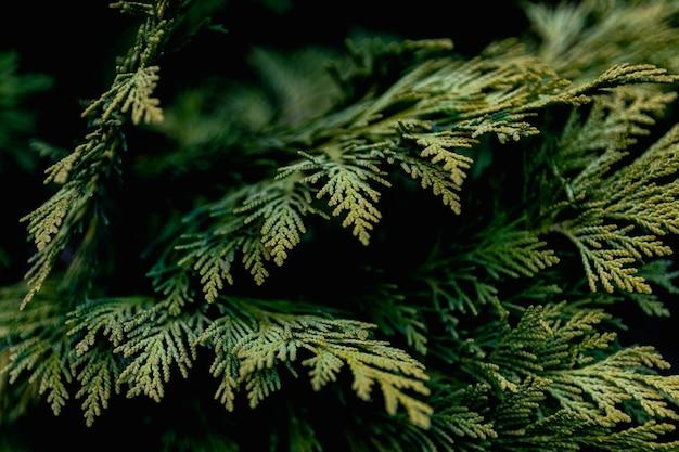 Bladeren abstract groen textuur natuur achtergrond blad