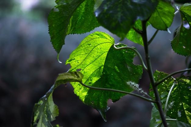 Bladeren die overdag het natuurlijke zonlicht reflecteren op een donkere achtergrond