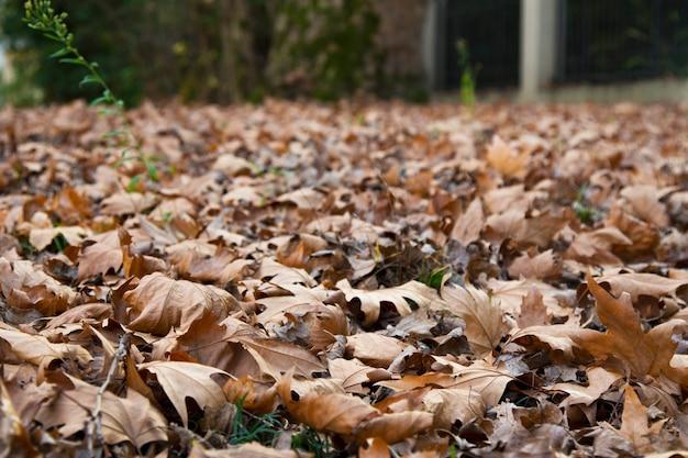 Bladeren die van de bomen in het bos zijn gevallen met het begin van de herfst gevallen esdoornbladeren, late herfst Premium Foto