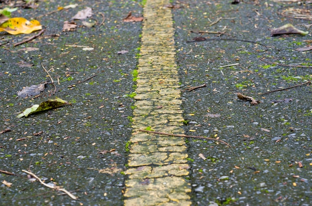Bladeren drogen op de grond, achtergronden, patronen, wazig