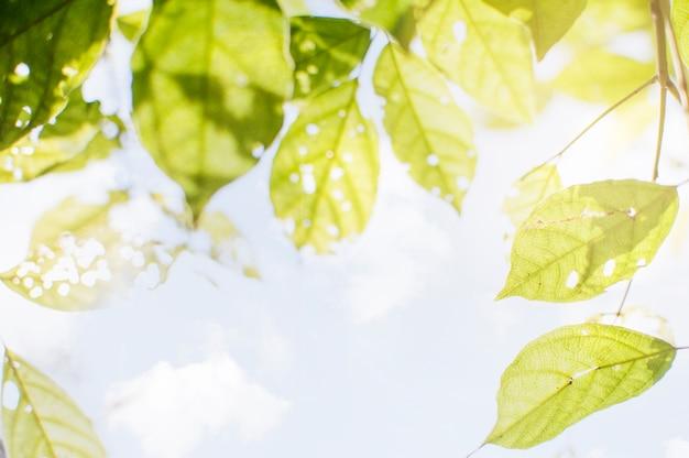Bladeren en licht