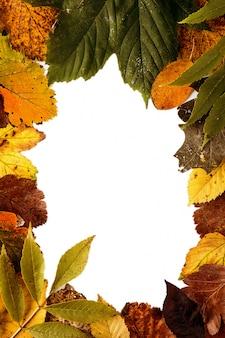 Bladeren gerangschikt in cirkel op wit