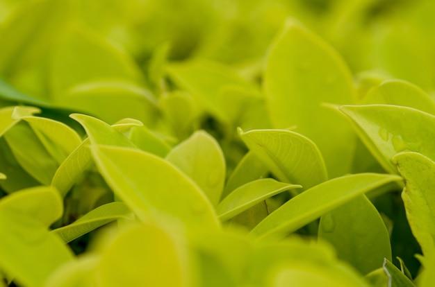 Bladeren groen, lichtgeel met patroonvervaging als achtergrond.