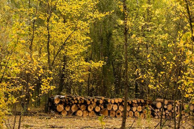 Bladeren in herfstbos bij zonnig weer