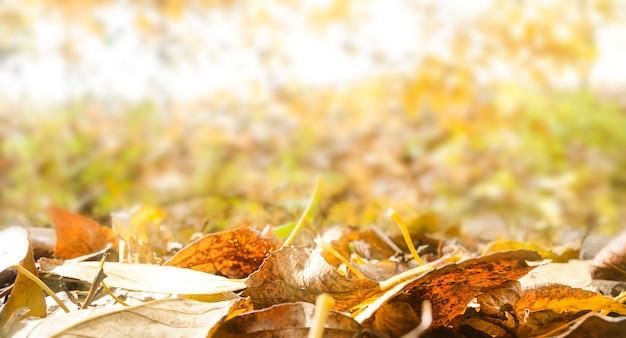 Bladeren natuurlijke achtergrond. kleurrijk gebladerte tegen de achtergrond van herfstbos.