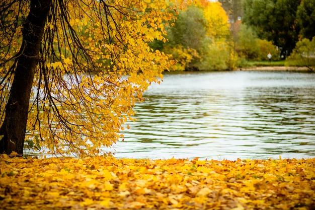 Bladeren op de takken in het de herfstbos.