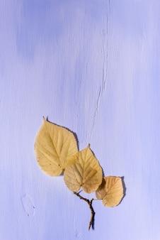 Bladeren op een houten achtergrond met vrije ruimte voor tekst