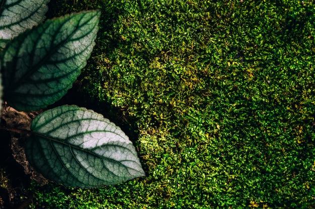 Bladeren op een zwarte achtergrond