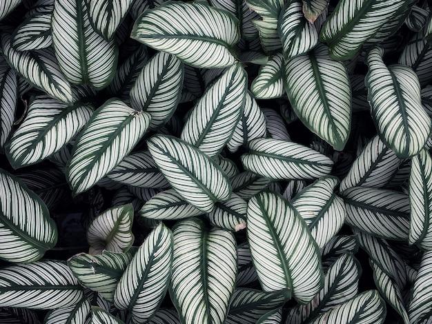 Bladeren overlappen elkaar afwisselend.