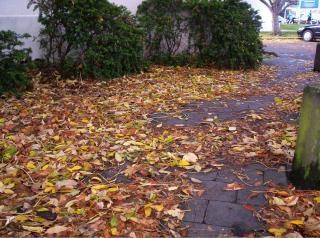 Bladeren, parkeerterrein