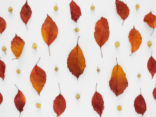 Bladeren patroon achtergrond