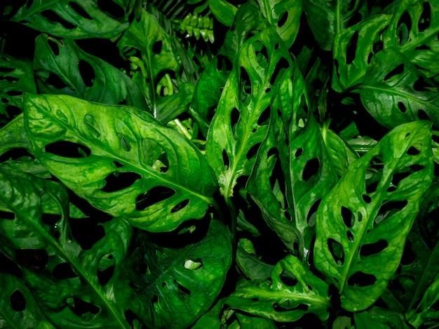 Bladeren textuur achtergrond.
