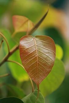 Bladeren tropisch bos bomen textuur achtergrond behang