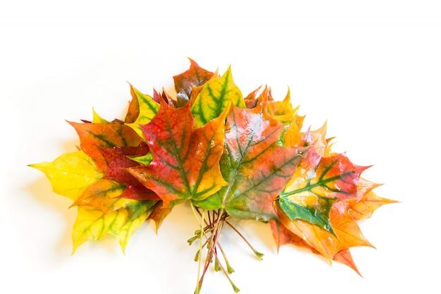 Bladeren van de de herfst de kleurrijke bundel op wit. bovenaanzicht en kopieer ruimte.