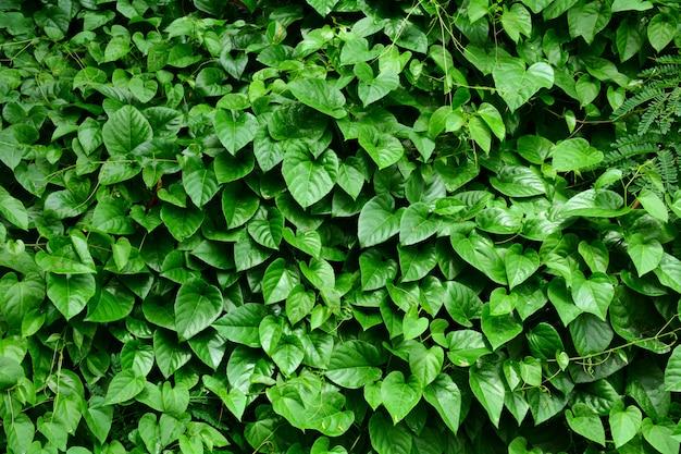 Bladeren van klimop die een kleine boom in het bos behandelen