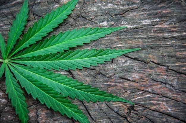 Bladeren van marihuana op een houten tafel. hennep. hennep. marihuana
