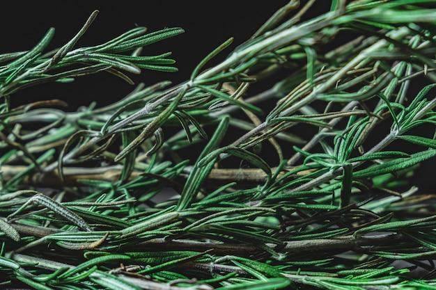 Bladeren van rozemarijnplant in donkere oppervlakte. close-upmening van rozemarijnkruid.