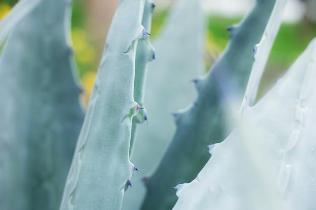 Bladeren van spike met textuur.