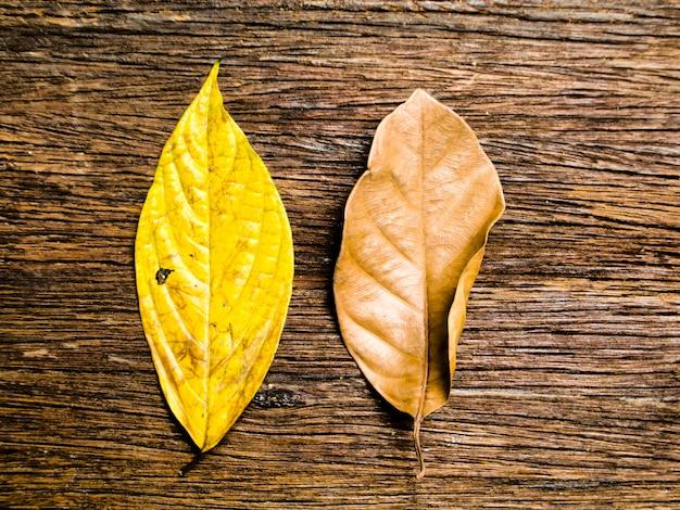 Bladeren van veranderende houten achtergrond