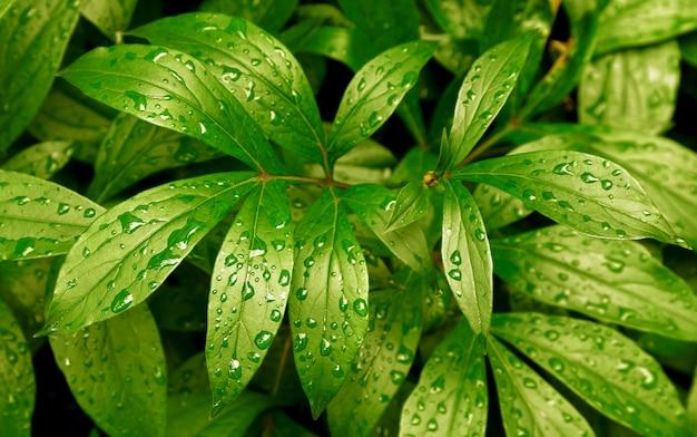 Bladeren varen regen druppels tropisch