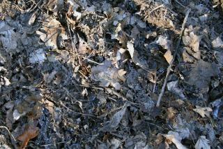 Bladeren, verrotte